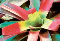 Flowerthmb