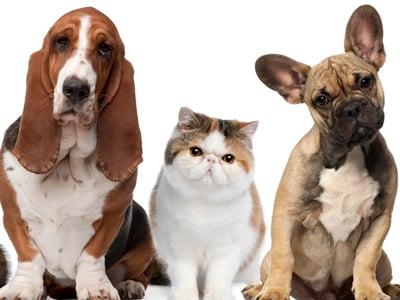 Pet Friendly Condo