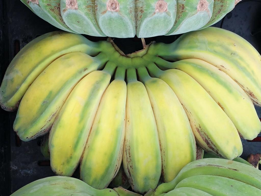 Banana Farm Hawaii Cover