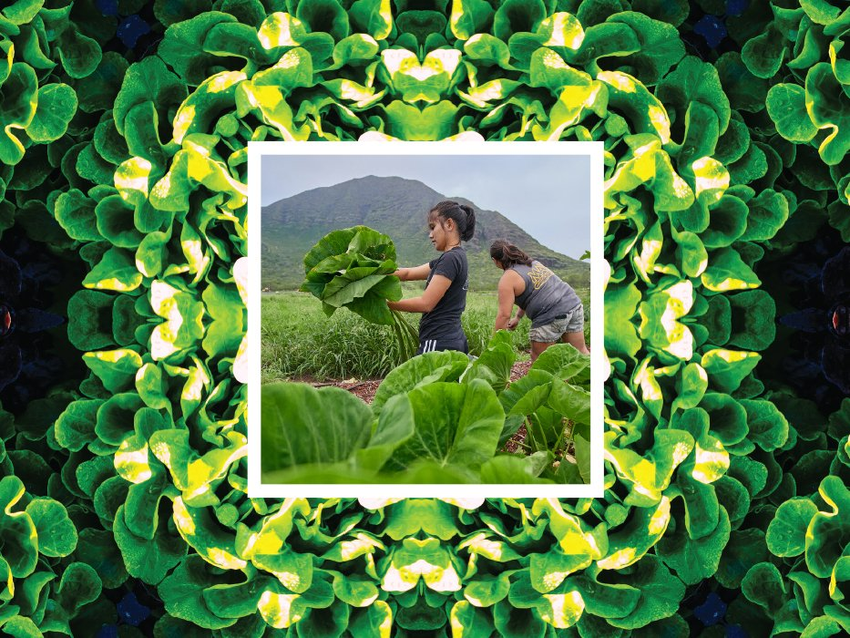 The Hawaii We Want Lettuce Maofarms Cover
