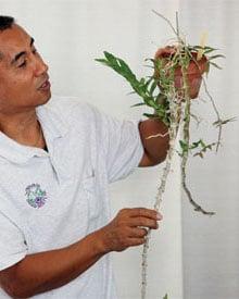 Windwardorchidsociety Th