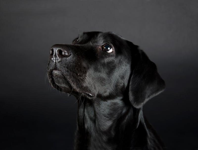 Scent Dog Detective Opener