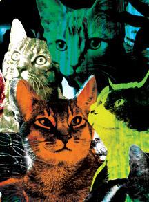 Feralcatsth