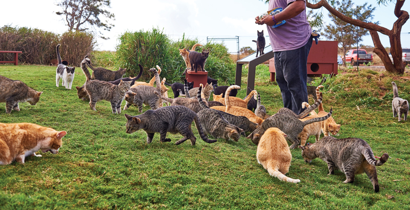 Lana'i cat sanctuary