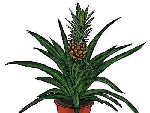 Green Party Pineapple Plant1