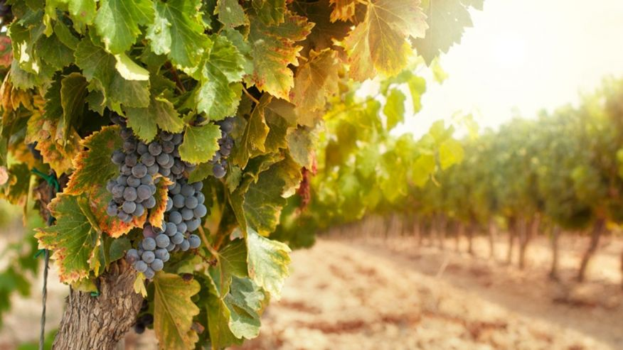 Wineries file suit against state