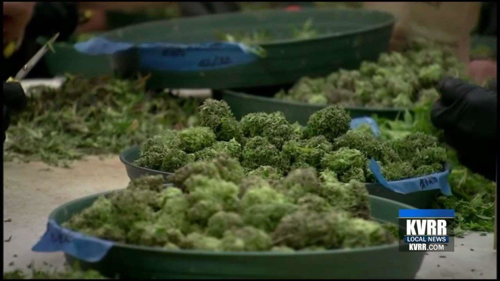 State Health Council OKs medical marijuana rules
