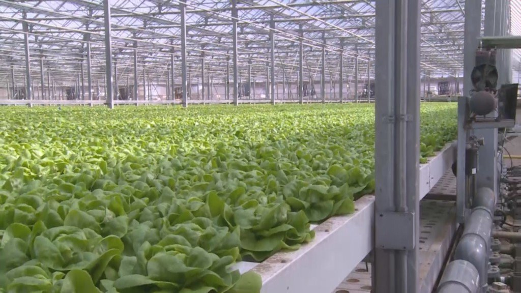 First death reported from E. Coli outbreak linked to romaine lettuce