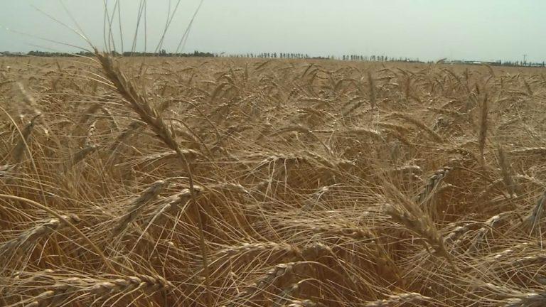 grain buyer ordered to stop doing business in north dakota kvrr
