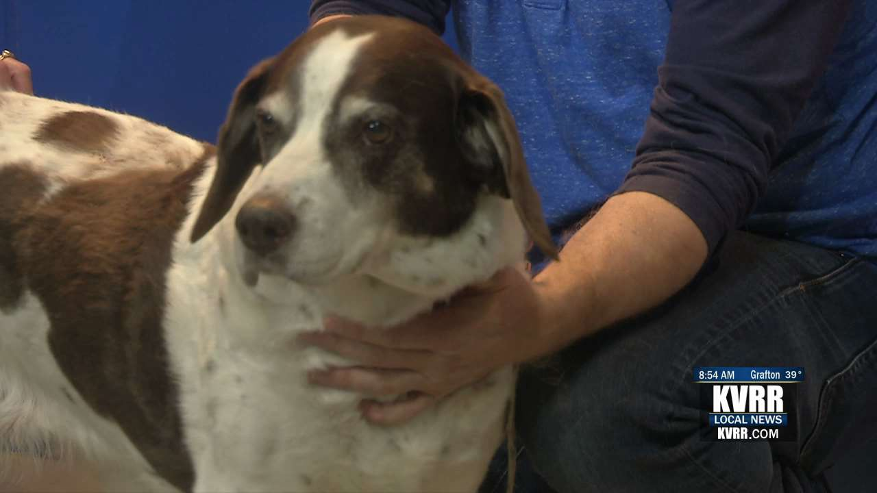 LIVE: Pet Connection: Meet Ruby