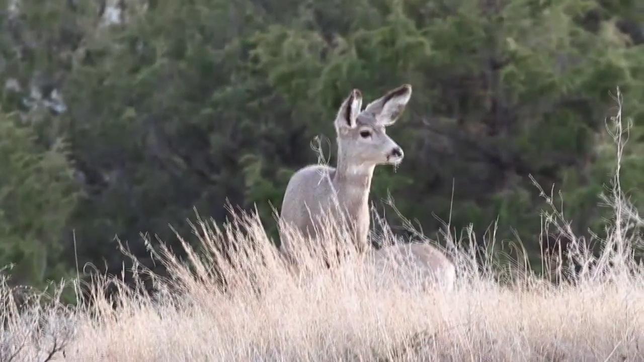 Tim Walz Makes Trip To Fergus Falls For Governor's Deer Hunting Opener - KVRR