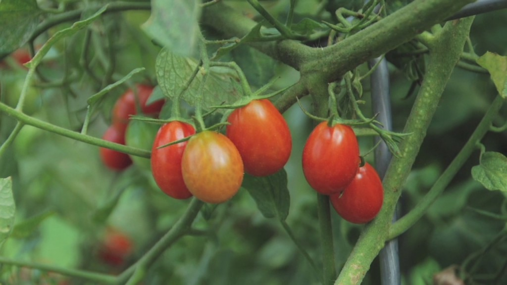 Melinda's Tomatoes