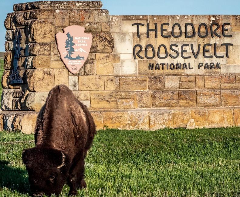 Theodore Roosevelt Nat Park Bison
