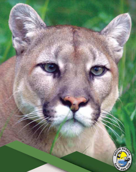 Mountain Lion Ndgf Photo 1