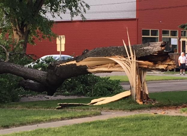 Tree Down 3