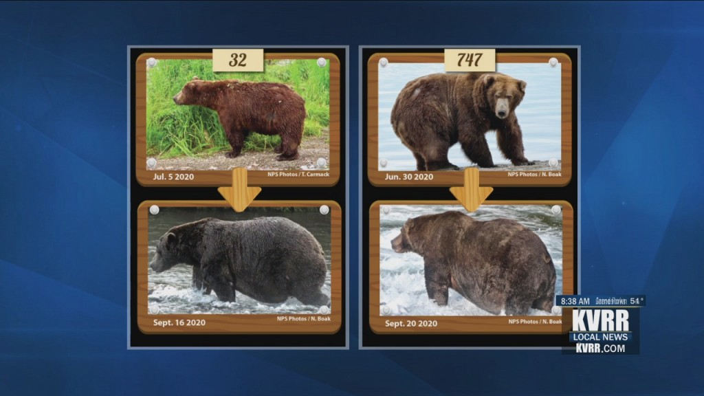 Soc Dis Fat Bear Finals
