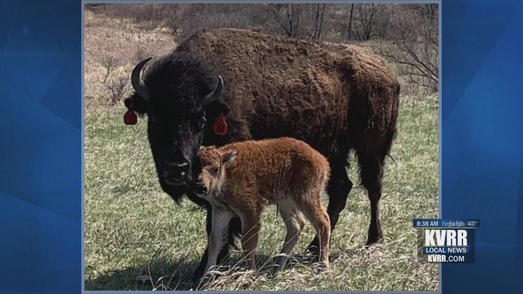 Soc Dis Buffalo