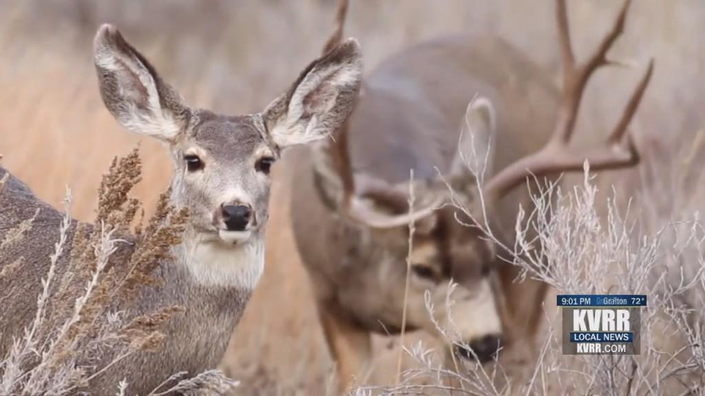 Fargo Wildlife Management