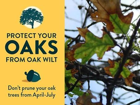 Oak Wilt Banner 1