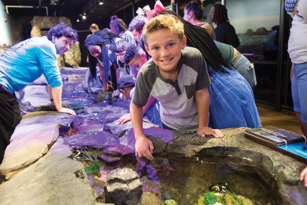 Ad Aquarium