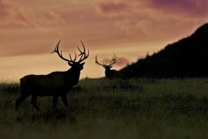 Nature Shots 002