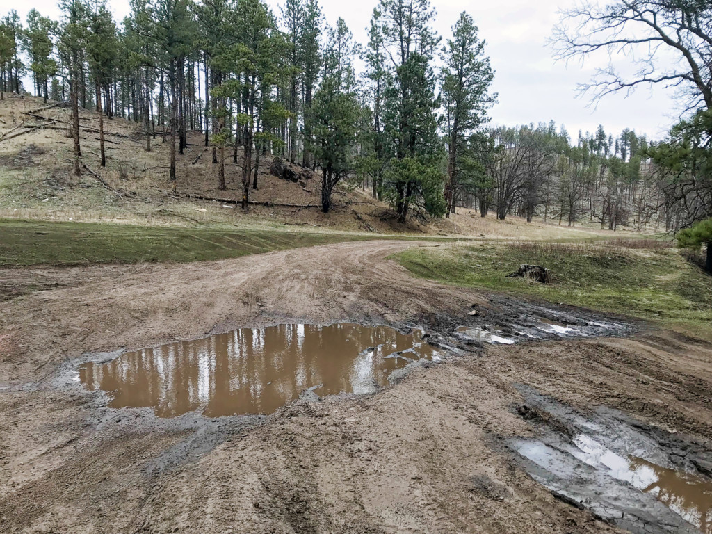 A muddy road, reminding users that roads and trails in the Black Hills will remain unusable until Spring moisture dries