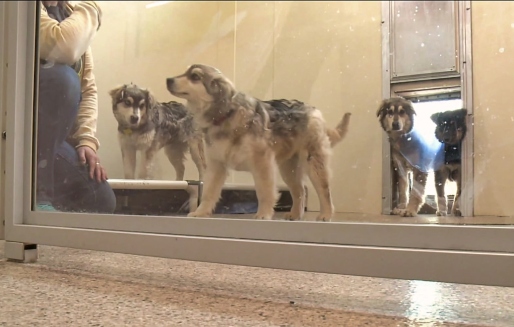 The AHeinz57 shelter in De Soto, Iowa is taking care of dogs that were stranded during the recent flooding