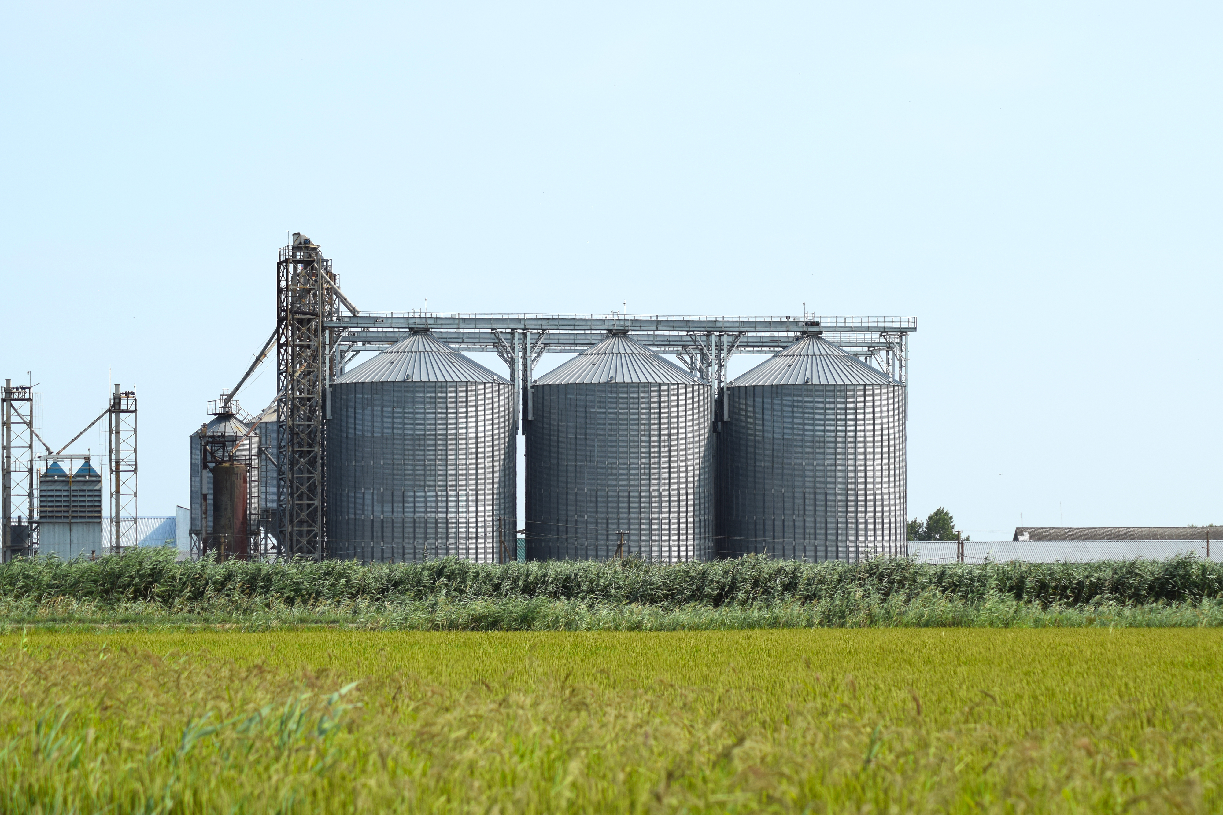 2 workers die after being trapped in grain silo - KNBN NewsCenter1