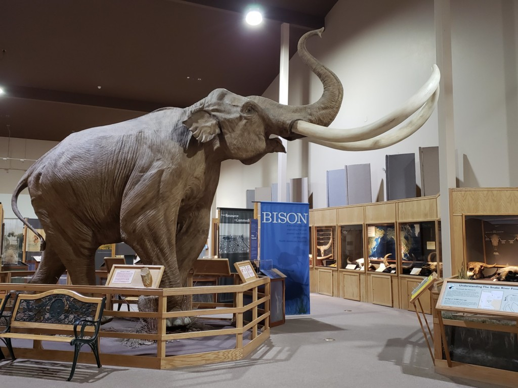 "The Mammoth Site ""Bison Exhibit"", Courtesy FB"