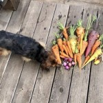 For The Love Of Carrots