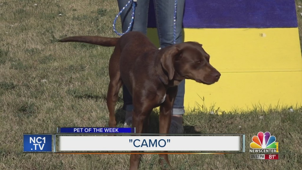 Pet Of The Week Camo