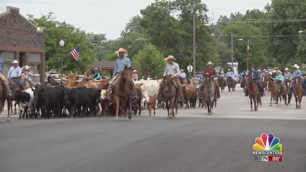 Bh Cattle Drive