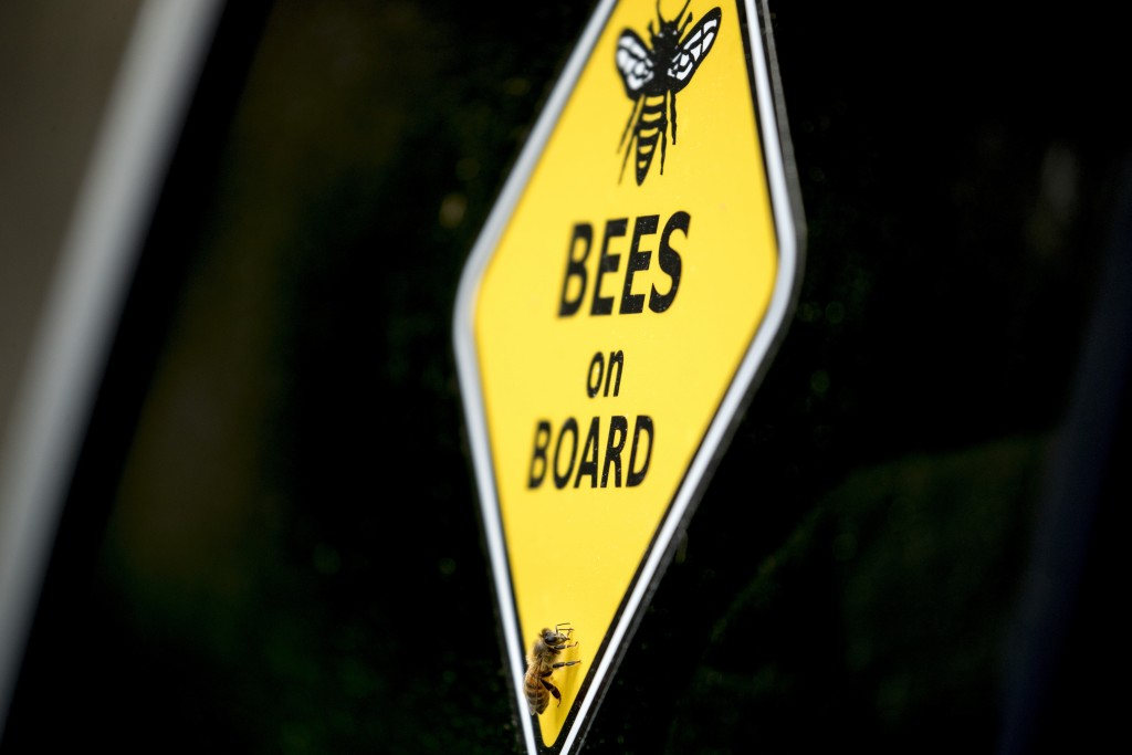 Virus Outbreak Rescuing Bees