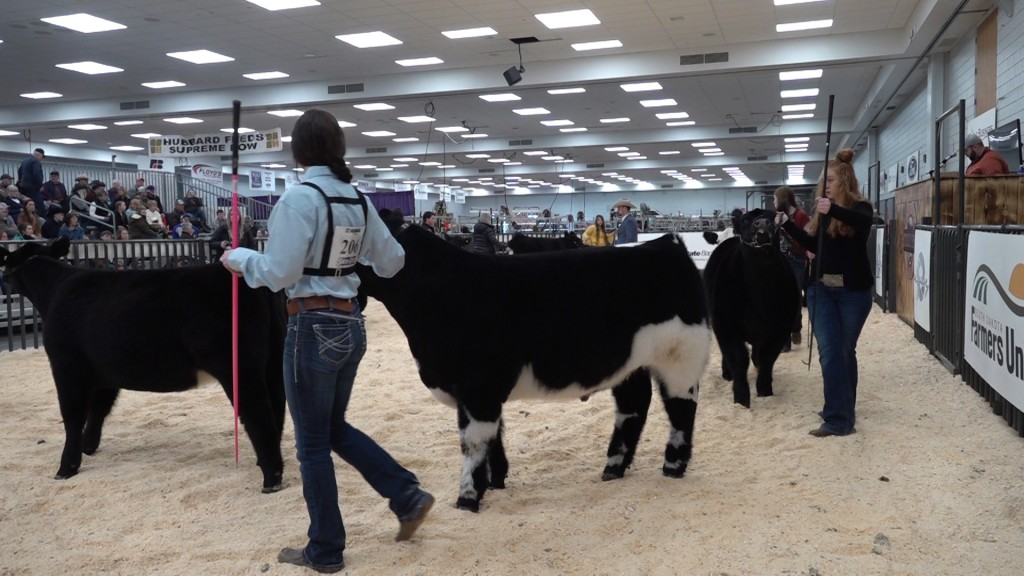 Youth Beef Show 4