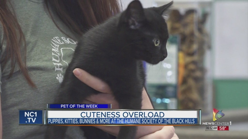Pet Of The Week Puppies, Kitties, And Bunnies Oh My!