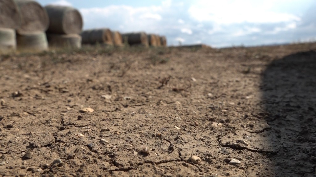 Drought Conditions 13