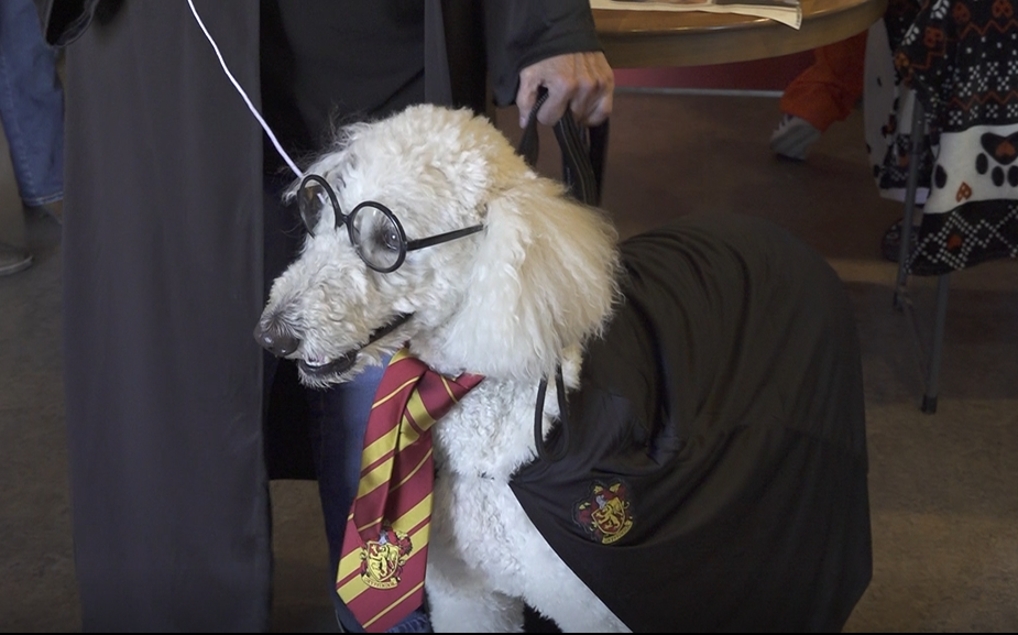 Dog dresses up as Harry Potter at Poochaween