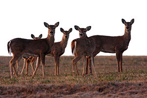 Illinois gearing up for youth firearms deer hunt outdoornews for Minnesota fishing license age