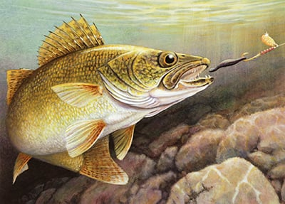 Buy a walleye stamp says dnr and support stocking for Mn dnr fishing regulations