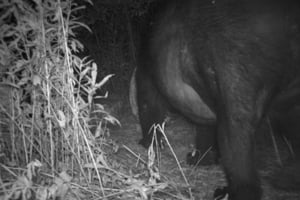 Washington county man survives attack by 700 pound black bear washington county man survives attack by 700 pound black bear publicscrutiny Choice Image
