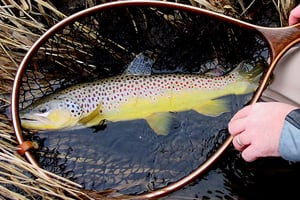 Hatchery projects moving forward - Outdoornews