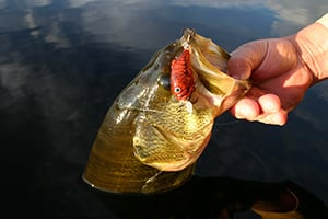 Five top fishing presentations for late summer bass