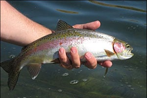 Iowa gearing up for spring urban trout stocking outdoornews for Iowa dnr fishing report