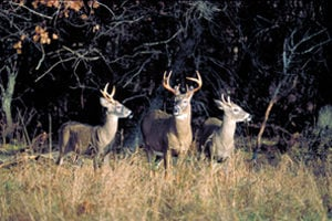 After another mild winter maine may again add deer for How much is a new york state fishing license