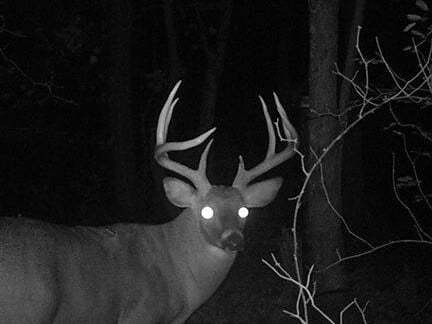 red moon for deer hunting 2018 - photo #14