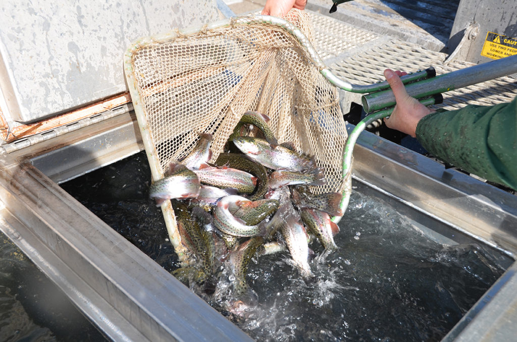 Trout, trout, pretty little trout: Stocking time on the Vermillion