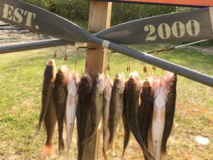 Upper red maintains four walleye bag limit outdoornews for Pa fishing seasons and limits 2017