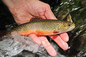 Federal fish hatchery recovers from 2016 west virginia for Virginia fish hatchery