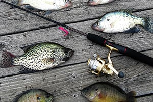 New crappie regs for pymatuning reservoir take effect for Pymatuning fishing report