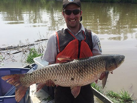 Asian carp outdoornews for Mississippi river fish